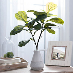 Fiddle Leaf Arrangement in White Planter