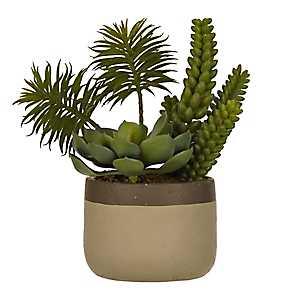 Green Succulent Arrangement in Tan Planter