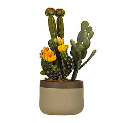Cactus Succulent Arrangement in Tan Planter