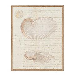 Shell Manuscript I Framed Art Print