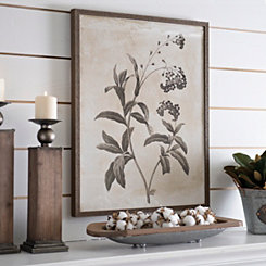 Earthy Botanicals I Framed Art Print