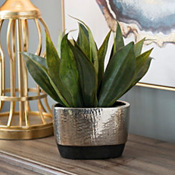 Agave Arrangement in Silver Planter