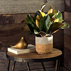 Magnolia Leaf Arrangement in Cork Planter
