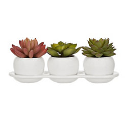 Ceramic Bowls Succulent Arrangement