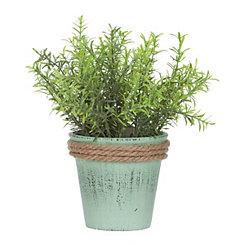 Springeri Arrangement in Blue Pot Planter