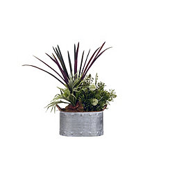 Staghorn Fern Mix Arrangement in Metal Planter
