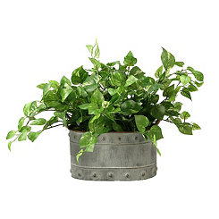 Pothos Ivy Arrangement in Oval Metal Planter