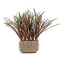 Areca Grass Arrangement in Cream Ceramic Planter