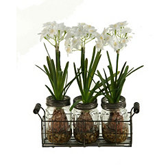 4-pc. Paperwhite Arrangement in Glass Jar Holder