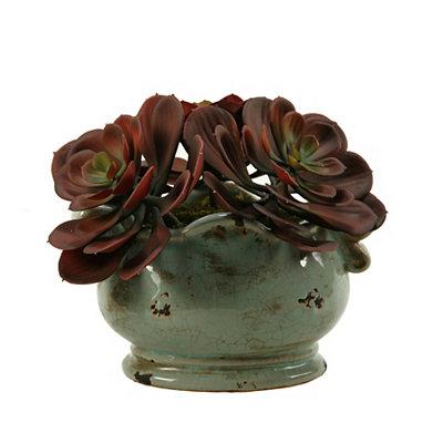 Echeveria Arrangement in Green Ceramic Planter