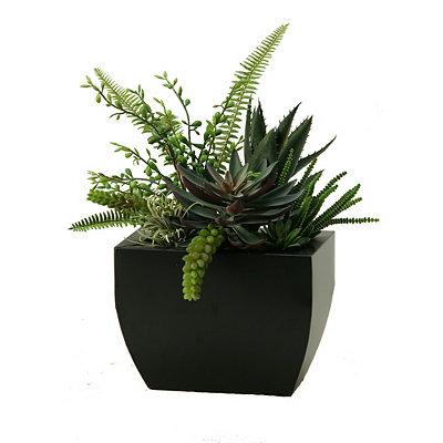 Aloe and Echeveria Arrangement in Black Planter
