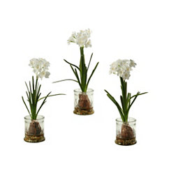 Paperwhite Arrangement in Glass Planters, Set of 3