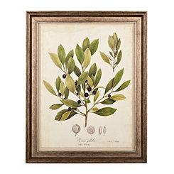 Botanical Leaves I Framed Art Print