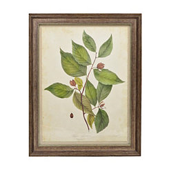 Botanical Leaves II Framed Art Print