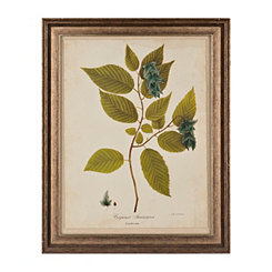 Botanical Leaves III Framed Art Print