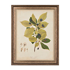 Botanical Leaves IV Framed Art Print