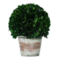 Boxwood Topiary Arrangement, 13.4 in.