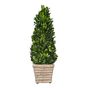 Preserved Boxwood Topiary, 13 in.