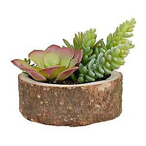 Wood Slice Succulent Arrangement