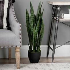 Sansevieria Floor Plant in Black Planter