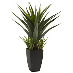Agave Floor Plant in Black Planter