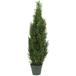 Cedar Silk Tree, 4 ft.