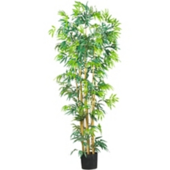 Bambusa Bamboo Silk Tree, 6 ft.