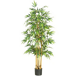 Bamboo Silk Tree, 5.3 ft.