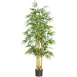 Bamboo Silk Tree, 5.3 ft.