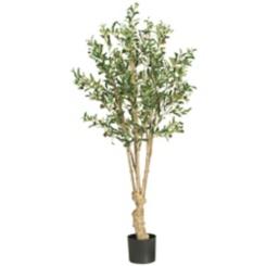 Olive Silk Tree, 5 ft.