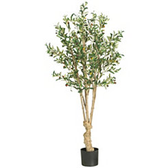 Olive Silk Tree, 5 ft.