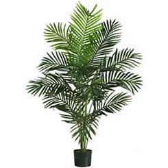 Paradise Palm Tree, 5 ft.