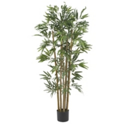 Bambusa Bamboo Silk Tree, 4 ft.