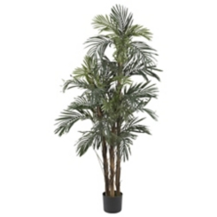 Robellini Palm Silk Tree, 5 ft.