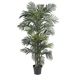 Golden Cane Palm Silk Tree, 6.5 ft.