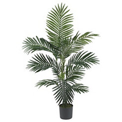 Kentia Palm Silk Tree, 4 ft.