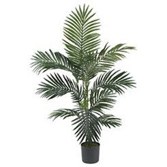 Kentia Palm Silk Tree, 4 ft.