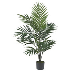 Kentia Palm Silk Tree, 5 ft.