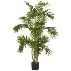 Areca Palm Silk Tree, 4 ft.