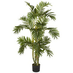 Areca Palm Silk Tree, 4 ft.