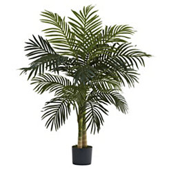 Golden Cane Palm Tree, 4 ft.