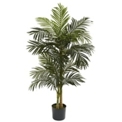 Golden Cane Palm Tree, 5 ft.