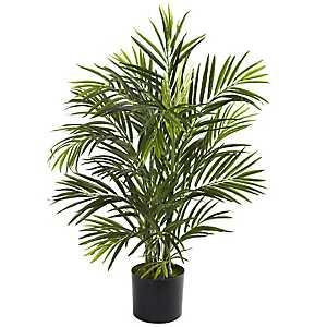 Areca Palm Tree, 2.5 ft.