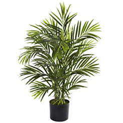 Areca Palm Tree, 2.5 ft.
