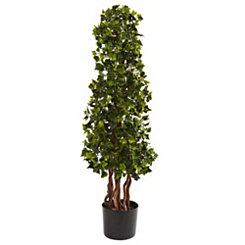 English Ivy Spiral Tree, 3.5 ft.