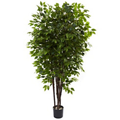 Deluxe Ficus Tree, 6.5 ft.