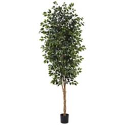 Ficus Tree, 8 ft.