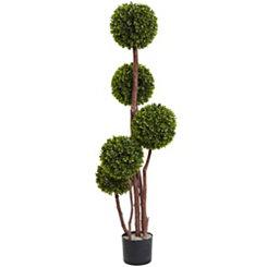 Boxwood Topiary Tree, 4 ft.