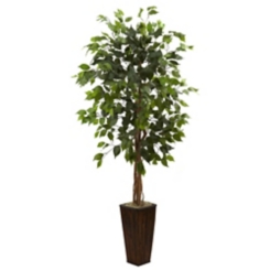 Ficus Tree in Bamboo Planter, 5.5 ft.