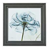 Rose In Blue X-Ray Framed Art Print